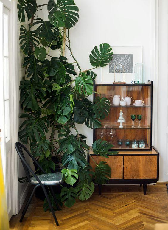 stanza stile tropical con pianta monstera deliciosa